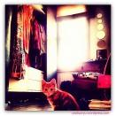 cat in my closet