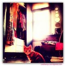 cat in my closet
