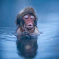 Iprotest in quiet contemplation….and respect all living things.