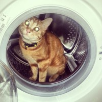 (Updated 18/3/12) Green Pets : Eco-Toilet training Haymitch the kitty-cat!