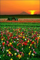 Colorful sunrise near Mount Hood, Oregon, USA