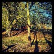 Autumn colours england (c) www.ceciliayu.com
