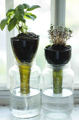 Glass-Bottle-Self-Watering-Planters