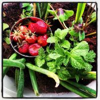 Urban Gardening Project : Allotments in Europe