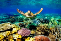 great-barrier-reef (c) 50shadesofage (dot)com