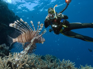 Lionfish-Walter-Schaerer-Great-Barrier-Reef (c) travelmemo (dot) com