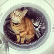 Cat in washing machine Greenhouse