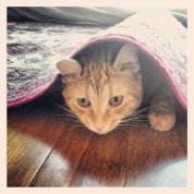 Cat under carpet greenhouse
