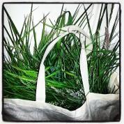 Fresh Grass for rabbit greenhouse