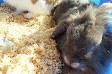 Greenhouse bunnies