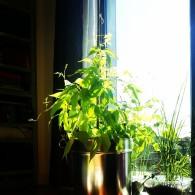 Greenhouse flat4 ceciliayu (dot) com