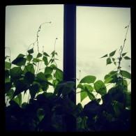 Greenhouse flat5 ceciliayu (dot) com