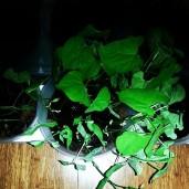 Greenhouse flat6 ceciliayu (dot) com