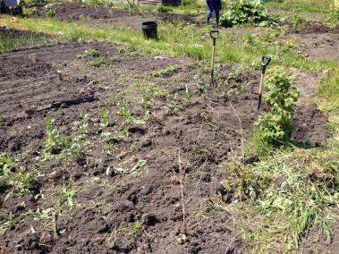 Greenhouse gardening day5