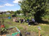 Greenhouse gardening day6