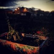 Greenhouse gardening1a