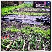 greenhouse gardening9