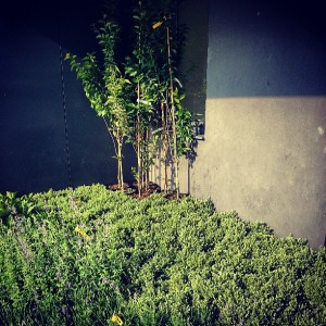 Greenhouse planters