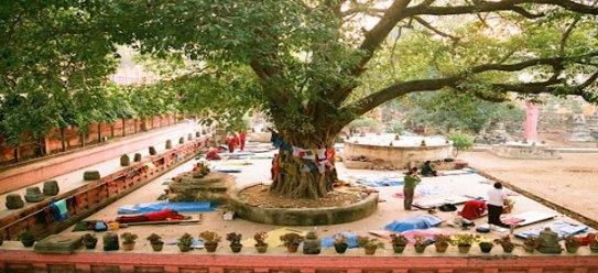 bodhi-tree-bodhgaya